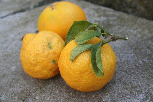 sb-citrus