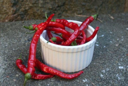 hot pepper 1